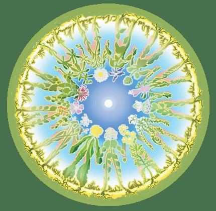 plantpeople-e1436609292933